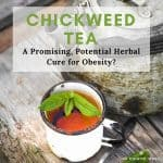 Chickweed tea might help you lose weight. Especially if your weight gain is caused by hormone replacement therapy or progesterone creams. There's research to support the use of this herb for its anti-obesity effects and other health benefits….