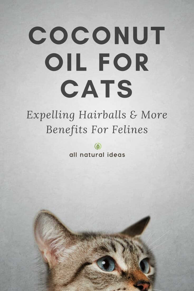 You probably know that coconut oil offers many health benefits. But did you know coconut oil for cats is a thing? Yes, even your feline best friend can reap the health benefits. Learn more about coconut oil for cats….