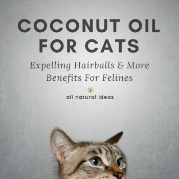 Coconut Oil For Cats: Health Benefits For Felines