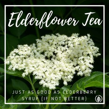 If you're into natural health, no doubt you're aware of elderberry syrup. It's one of the most popular natural prevention remedies and cures for colds and the flu. But have you heard of elderflower tea? Can preventing colds and flu be as simple as sipping a cuppa?