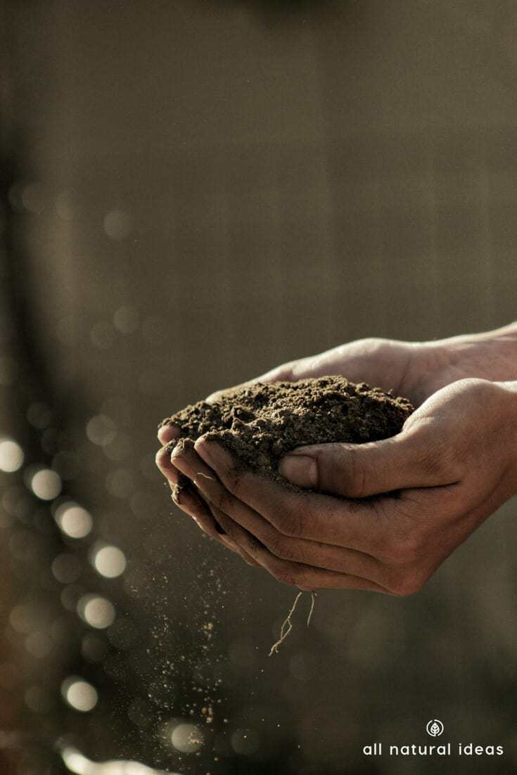 Love to get your hands dirty in the soil? If you're not familiar with humic acid, get to know it. It's like a natural steroid for plant growth. And it works by promoting hormone activity in plants.
