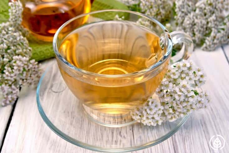 Yarrow tea comes from one of the most storied medicinal plants in history. If you've never heard of it, you might want to stock some in your cupboard.
