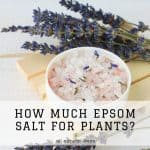 Growing your own veggies in your garden? Plants need the perfect amount of magnesium to yield exquisitely tasting produce. One thing you can add to soil is magnesium sulfate. But how much Epsom salt for plants is ideal?