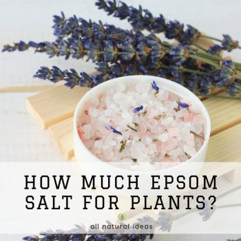How Much Epsom Salt for Plants to Get Tasty Veggies?