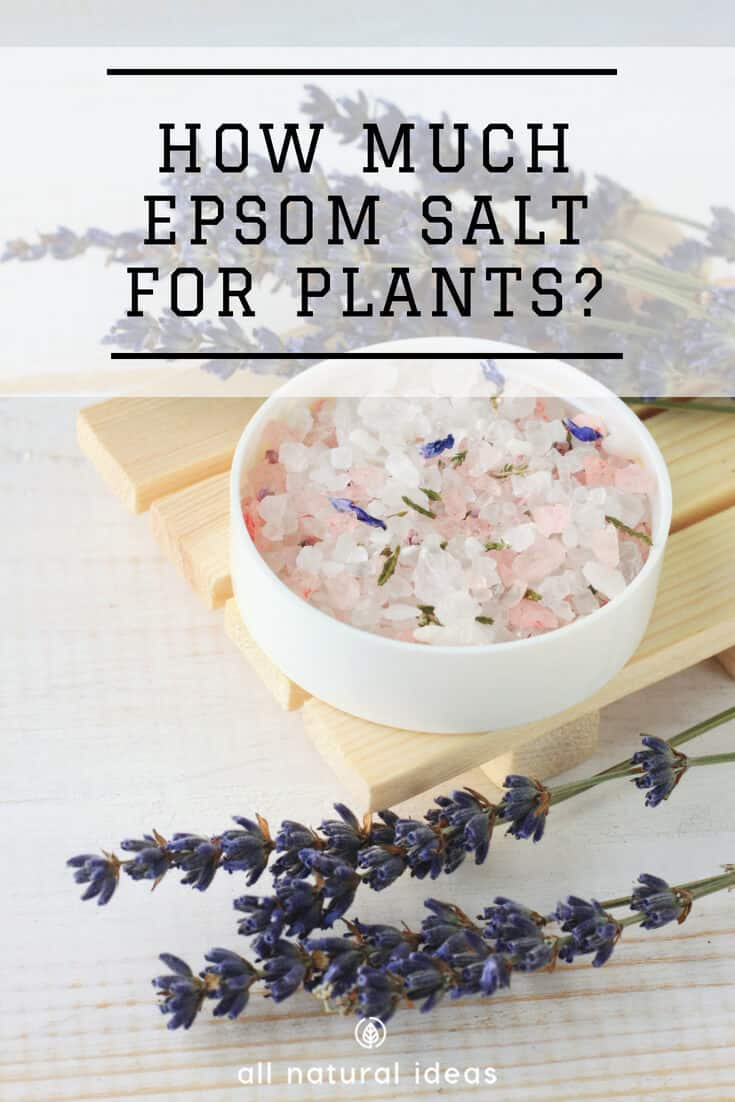 How Much Epsom Salt For Plants To Get Tasty Veggies All