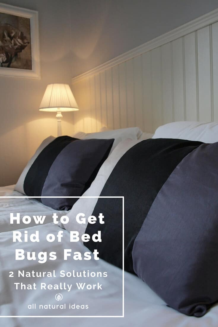 Do you have an infestation of miniature hitchhiking vampires, aka bed bugs? If so, it can be both a physical and psychological nightmare enduring their painful bites, sleepless nights, and long-lasting post-traumatic effects, such as never wanting to travel again. If you want to avoid harmful chemicals, is there a way how to get rid of bed bugs fast?
