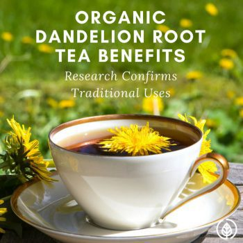 Organic dandelion root tea benefits include everything from improving lactation to killing aggressive cancer cells. It's been used for at least a couple thousand years in Chinese medicine. If you love herbal tea, make room for this one in your pantry.