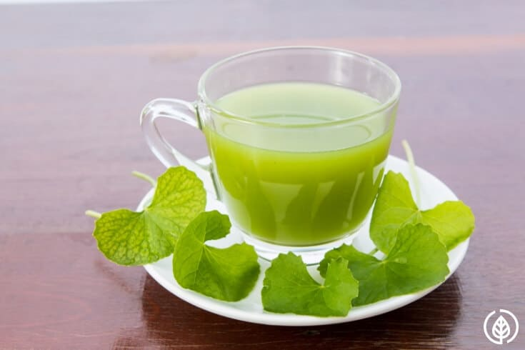 "Gotu kola tea benefits are numerous unlike the ""cola"" you probably grew up drinking. For thousands of years, traditional Chinese healers have considered this herbal medicine a ""miracle elixir of life."""
