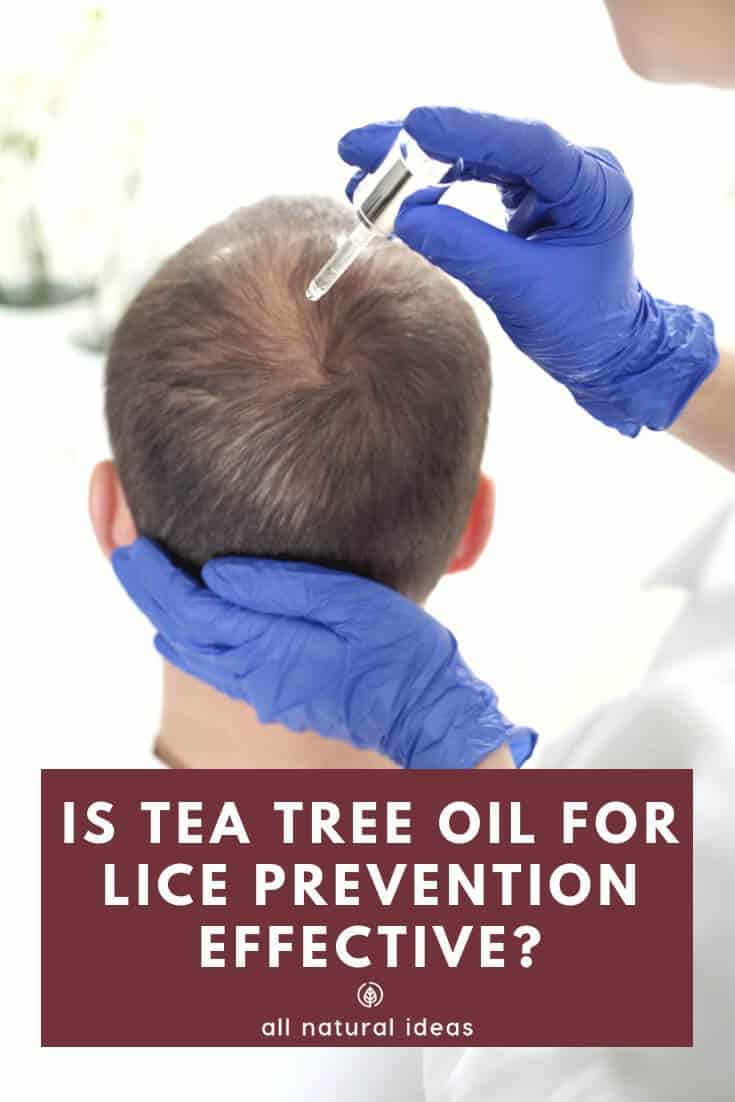 Is head lice a right of passage for kids, like getting chicken pox? Or, can natural remedies such as tea tree oil for lice prevention in shampoo work? Maybe your kid doesn't have to be kept from school if you apply it frequently to your child's scalp....