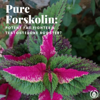 Pure forskolin is a supplement that has helped celebrities like Matthew McConaughey get ultra lean for movies. Never heard of it? Besides fat loss, there are other forskolin benefits. Learn about them here….